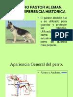 El Perro Pastor Aleman. Breve Referencia Historica
