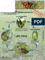 Monarch-Butterfly Lifecycle&Migration Factsheet