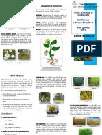 -Triptico-Reino-Plantae.docx