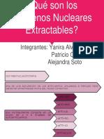 ¿Qué son los Antígenos Nucleares Extractables-.pptx