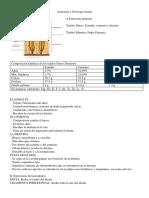 Anatomía y Fisiología Dental