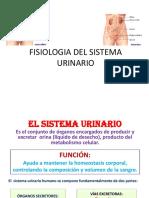 Fisiologia Del Sistema Urinario