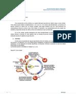 Ciclo Celular y Mitosis y Meiosis