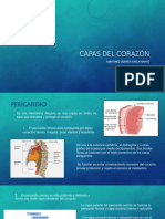 CAPAS DEL CORAZÓN.pptx