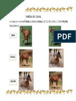 4b .FAMÍLIA DEL CAVALL  FITXA.pdf