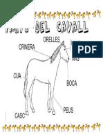 5. Parts Del Cavall