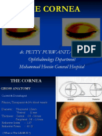 The Cornea Ppt Edit