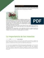 La Importancia de Los Insectos Para El Hombre