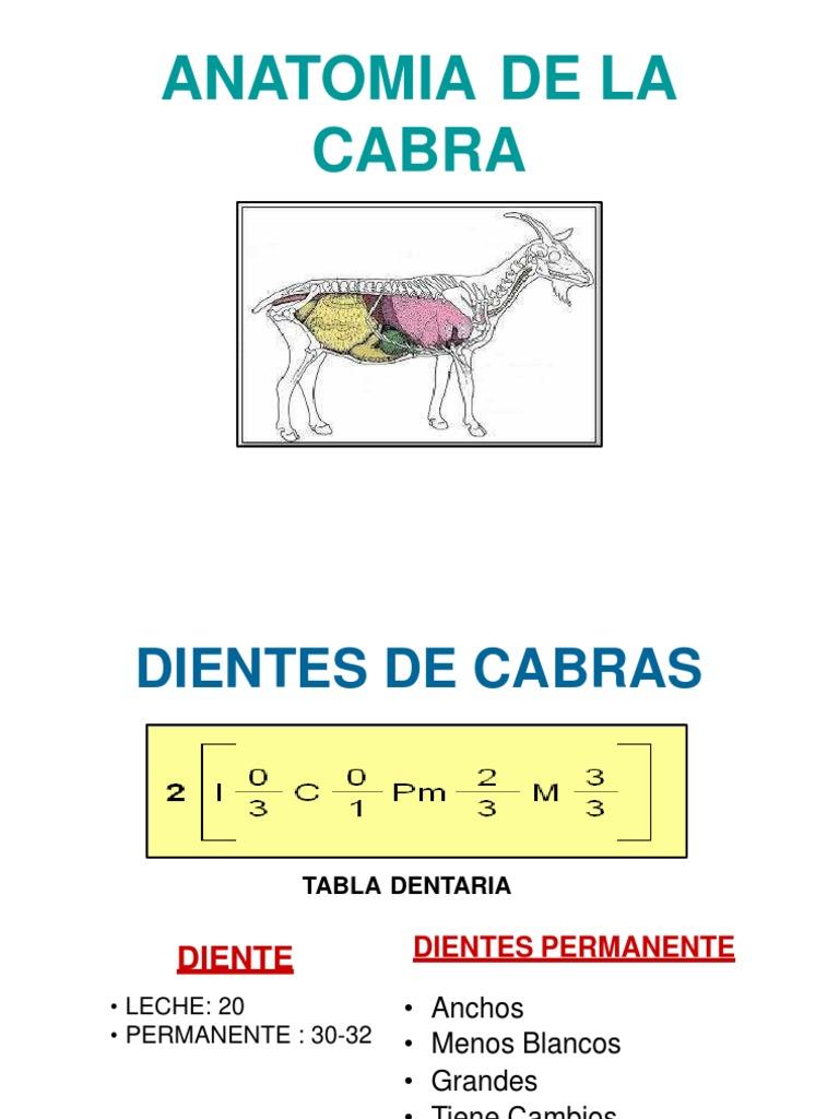 Vistoso Anatomía De Cabra Festooning - Imágenes de Anatomía Humana ...