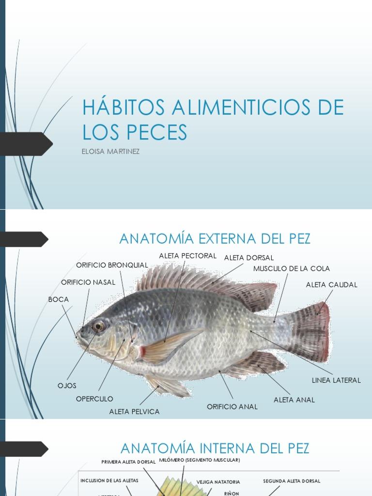 Hermosa La Anatomía De Un Pez Molde - Imágenes de Anatomía Humana ...