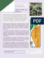 Noticias Harina Platano Verde