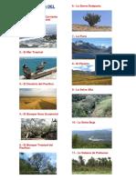 Ecoregiones Del Perú Dibujos