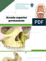 ANATOMIA DENTAL1.pdf