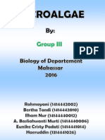 MicroAlgae Group III