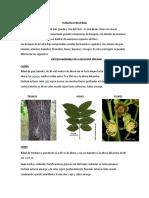 Flora en La Selva Baja