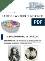 clase1Fisiologia