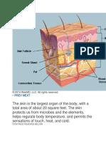 Anatomy Kulit