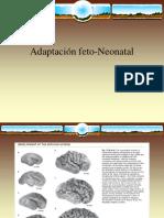 2017 Adaptación feto-Neonatal