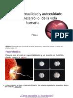 7°_Ciencias naturales_Unidad 2_Parte II_Fecundación,  embarazo y parto.