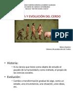 Historia y Evolución Del Cerdo