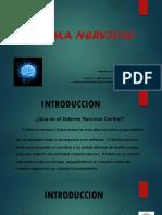 Sistema Nervioso Central Psyc251..