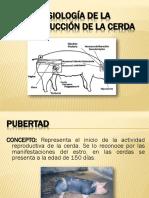 6.- Fisiologia de La Reproduccion de La Cerda