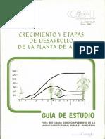 Crecimiento Y Etapas de Desarrollo de la planta de arroz.pdf