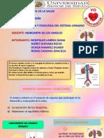 ANATOMIA-Y-FISIOLOGIA-DEL-SISTEMA-URINARIO.pptx