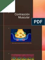 Contracción Muscular02017