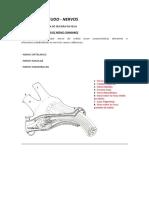 LISTA PARA ESTUDO - nervos.pdf