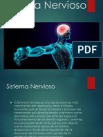 Sistema Nerviosouytutyu