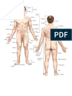 Estructura Humana, Aparato Digestivo, Circulatorio, Respiratorio, Hardware y Sofeare, Windows 10
