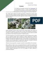 Taxonomia Koala