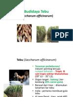 MATERI PEMBAHASAN-TEBU.pptx