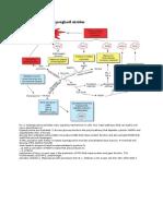 Diabetes sebagai penghasil oksidan.docx