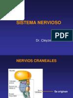 neurologico2 (1)