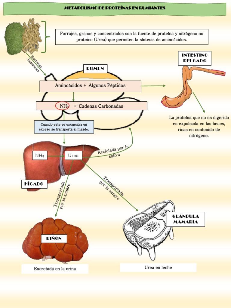 Aprender cómo curé mi metabolismo de los lipidos resumen