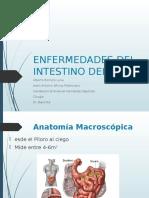 patologias de intestino delgado