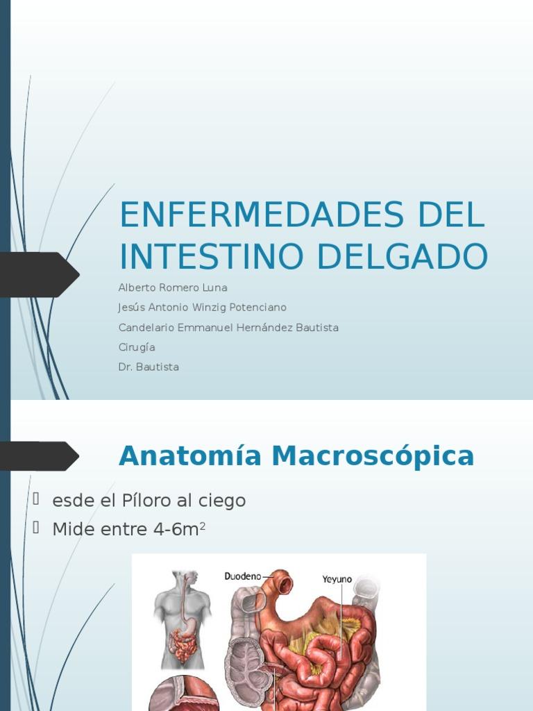 Asombroso Anatomía Macroscópica En Línea Imágenes - Imágenes de ...