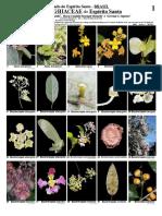 490 Malpighiaceae Do Espírito Santo