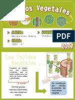 Tejidos Vegetales.pdf