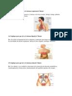 anatomía, fisiología, aplicación, clasificación y uso..docx