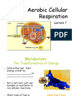 Aerobic Respiration Power Point