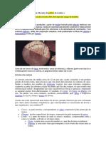 PDF Trabalho de BiO ESCRITO