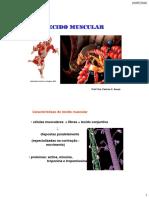 Anatomia - Tecido Muscular So Esqueletico e Liso 2016