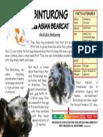 Binturong Aka Asian Bearcat