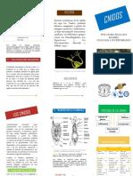 folleto invertebrados