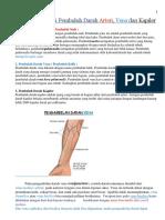 Definisi & Fungsi Pembuluh Darah Arteri, Vena Dan Kapiler