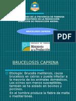 Brucelosis Power Cabras