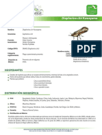 Fichapsilido.pdf